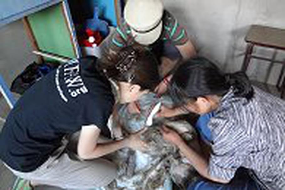 Les chiens ont à nouveau le droit de cité dans la ville de Jiangmen