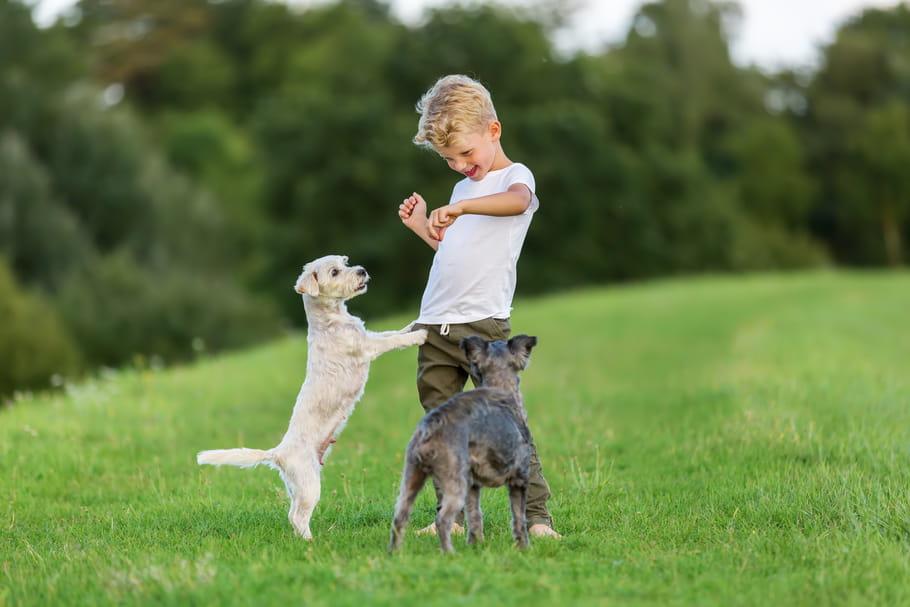 Comment empêcher son jeune chien de sauter sur les personnes?