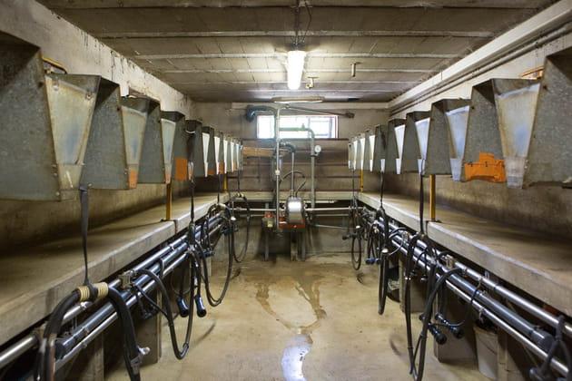 Une chèvre produit 3 litres de lait