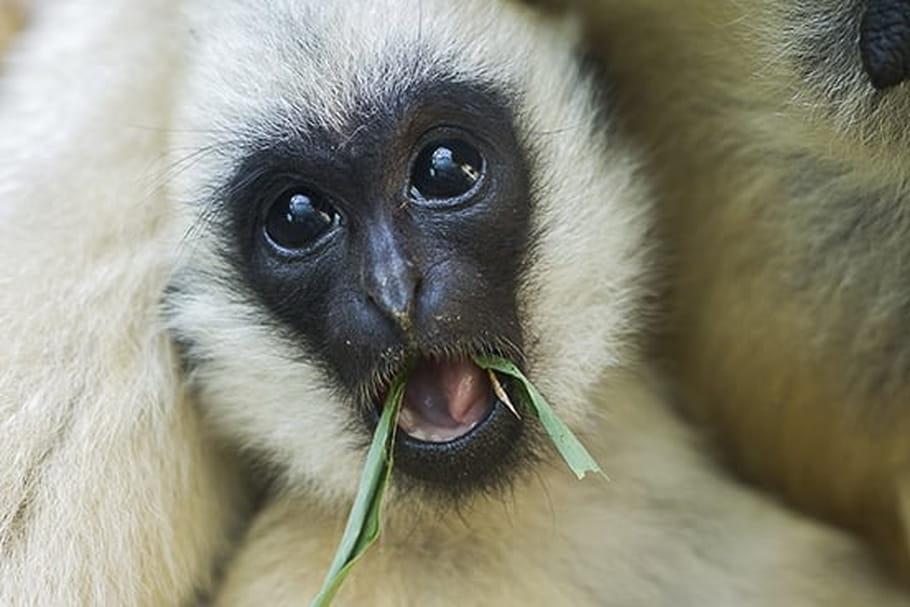 Parc zoologique de Mulhouse: informations pratiques
