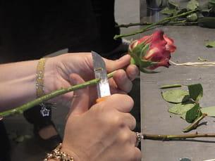 coupez en biseau la tige de la rose afin que cette dernière puisse bien se