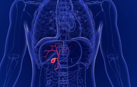 schéma vésicule biliaire