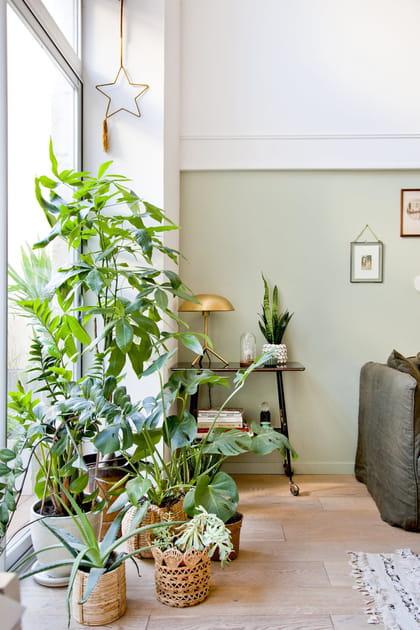Des plantes à foison à la fenêtre