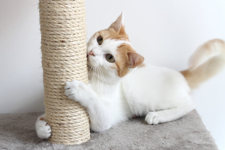Griffoir Chat Fait Maison meilleur griffoir pour chat : le bon modèle pour votre animal