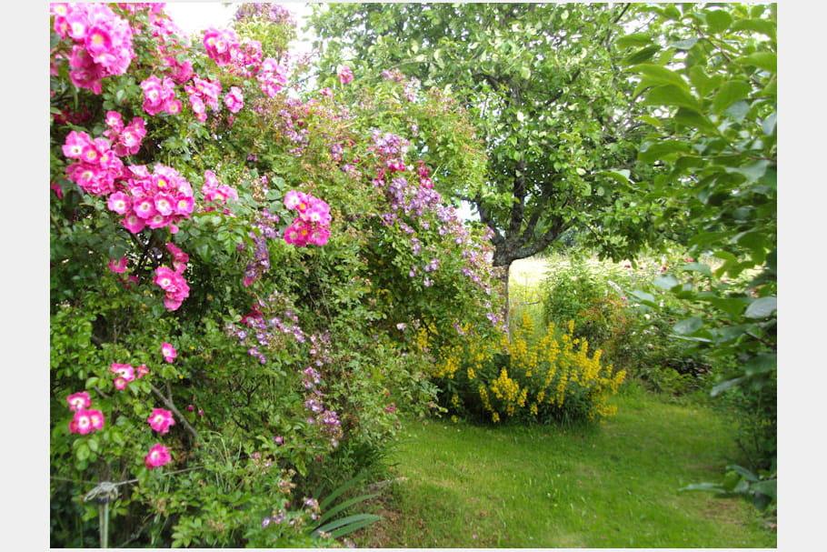 Un jardin fleuri for Composer un jardin fleuri