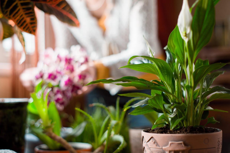 Arbre Fruitier En Pot Interieur plante dépolluante : ces végétaux qui vont purifier votre