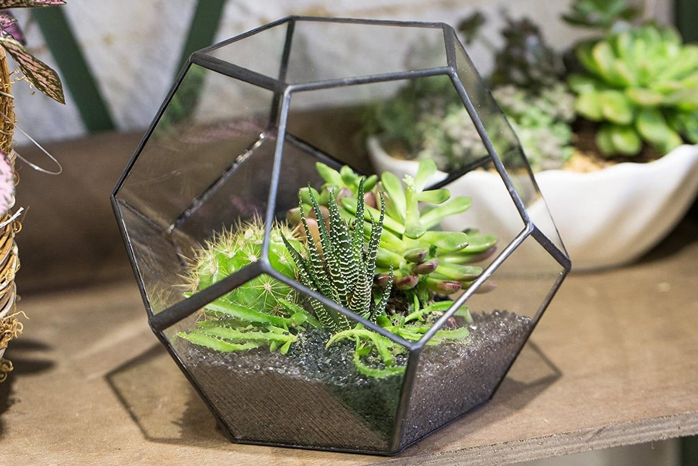 Meilleur terrarium: notre guide d'achat pour vos plantes vertes