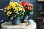 diy un support de pot de fleur en fil de fer. Black Bedroom Furniture Sets. Home Design Ideas