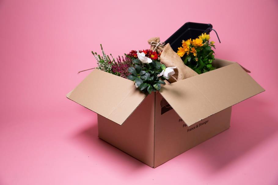 3box jardinage pour se (re)mettre au vert