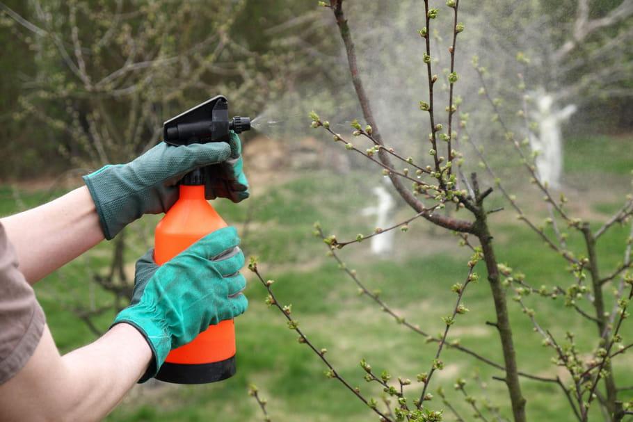 10astuces naturelles pour un jardin bio
