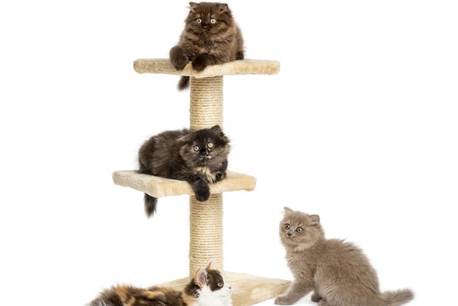 Meilleur arbre à chat: notre sélection des structures à tous les prix