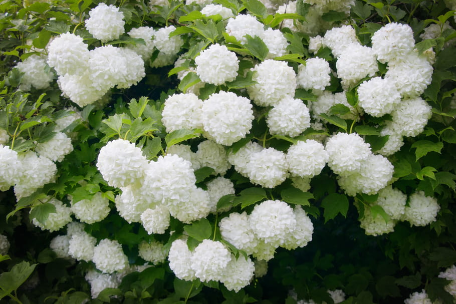 Les fleurs XXL à planter au jardin