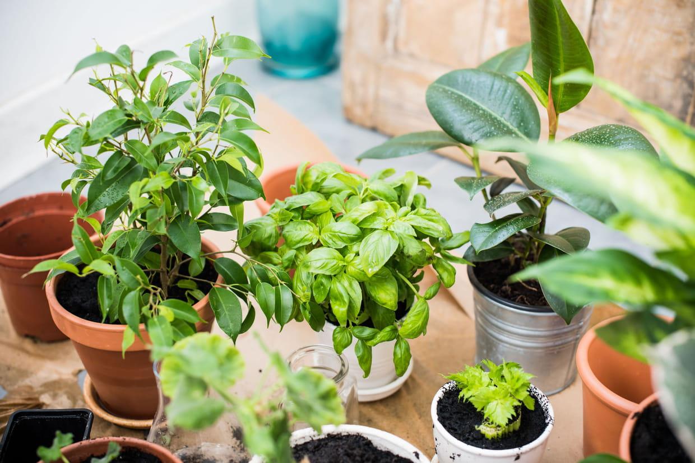 Arrosage Pour Plantes En Pot comment arroser ses plantes pendant les vacances ?