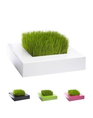 le carré de verdure de racine carré