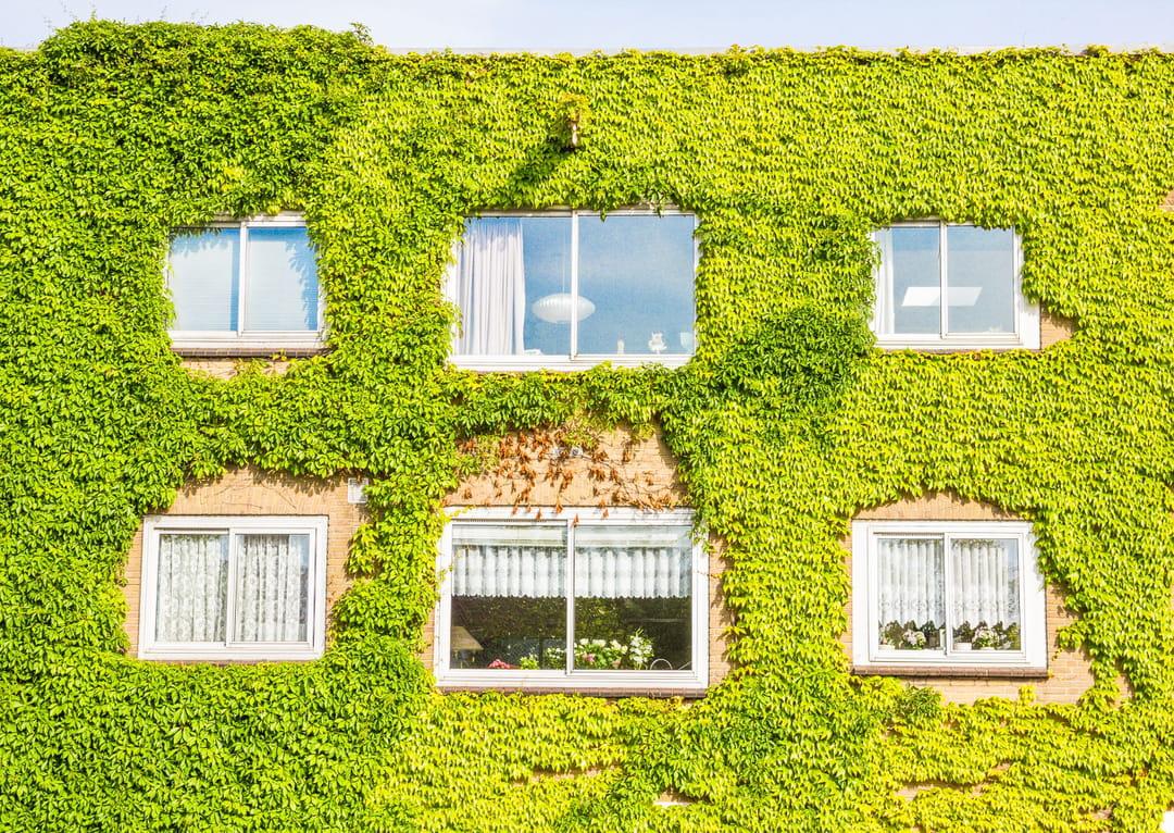 facade-maison-vegetalisee