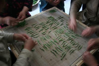 roulage du tai ping hou kui, dans le 'village des singes', en chine