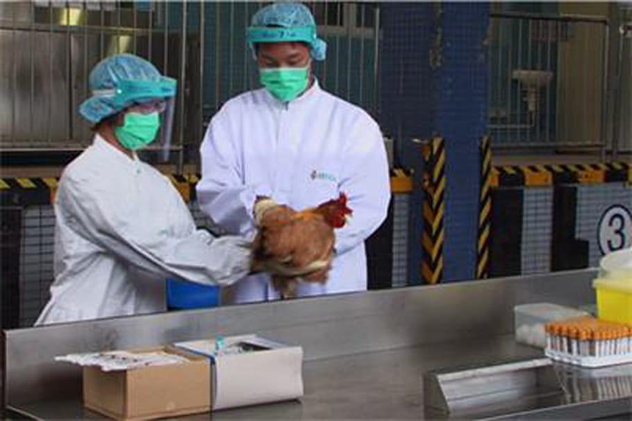 Grippe aviaire H7N9: premier cas à Pékin