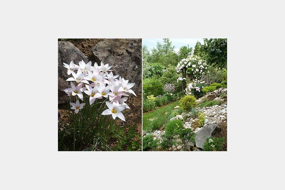 L 39 l gance ind modable des fleurs blanches le jardin des for Jardin de fleurs blanches