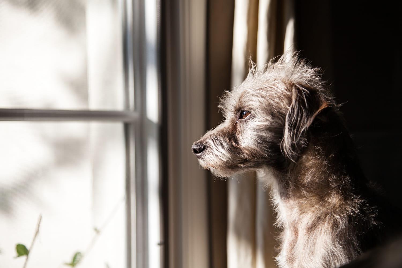 Nom de chien: trouvez des idées par lettre et par année