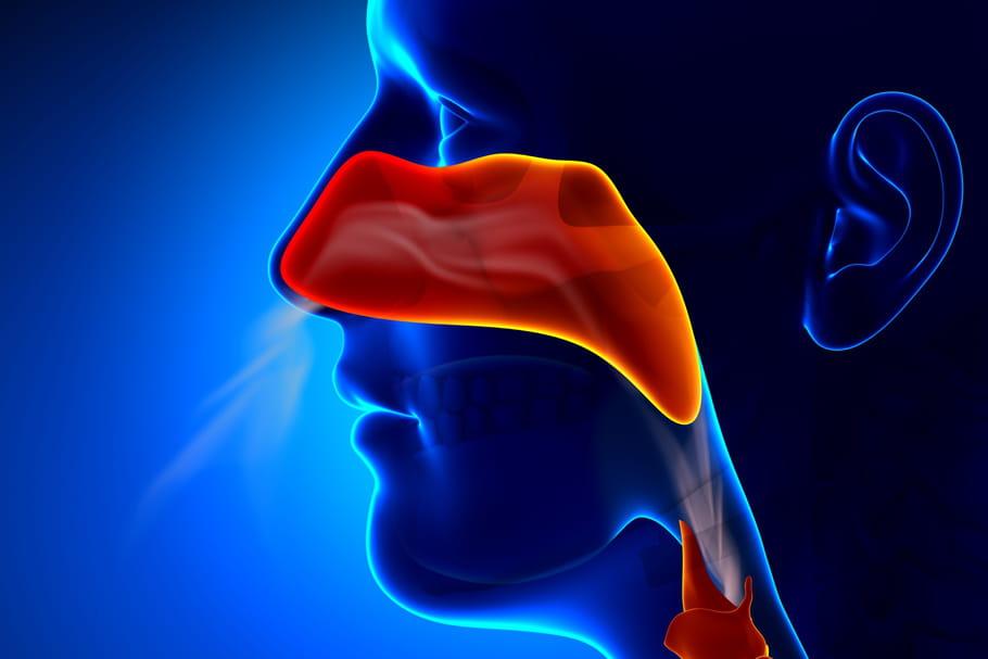 Scanner des sinus: comment il se déroule, comment le lire?