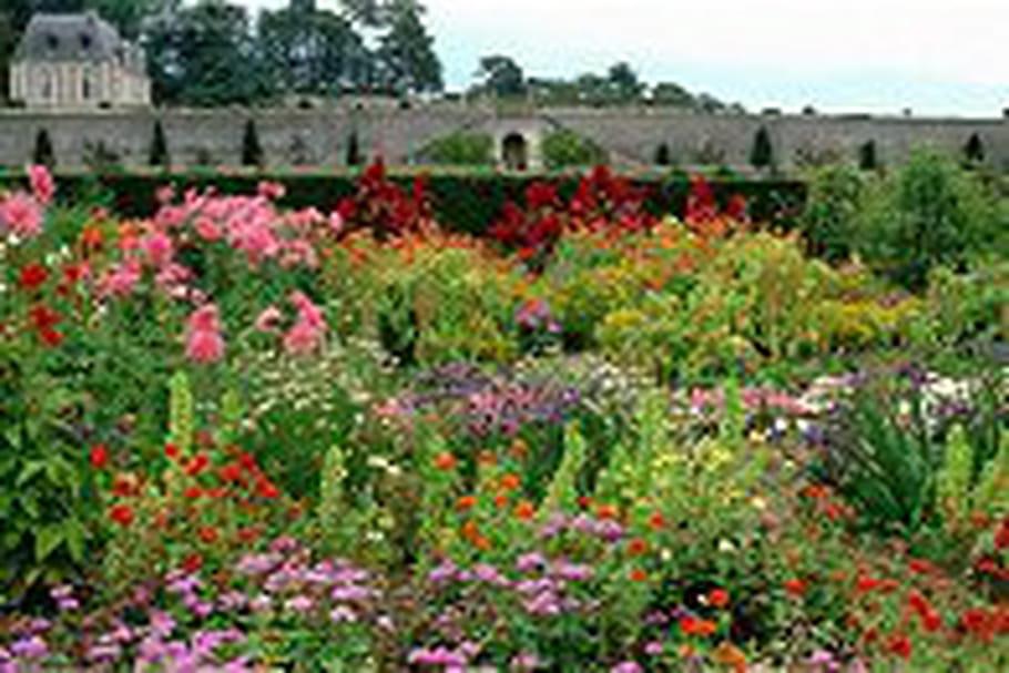 Percez les mystères des plantes et des fleurs comestibles au château de Valmer