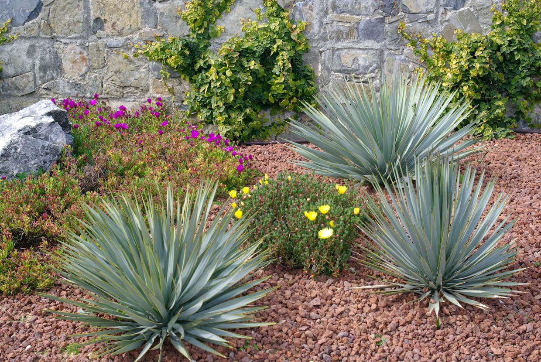 Plante Méditerranéenne Sans Arrosage comment aménager un jardin sans pelouse ?