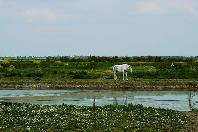 La réserve naturelle nationale de Lilleau des Niges