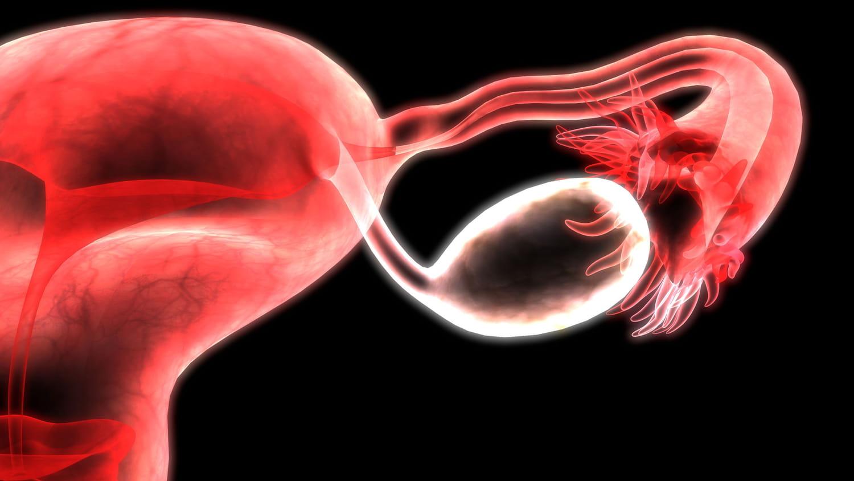 Don d'ovocytes: procédures et âge limite