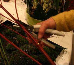 coupez en biais les branches de cornus et de saules.
