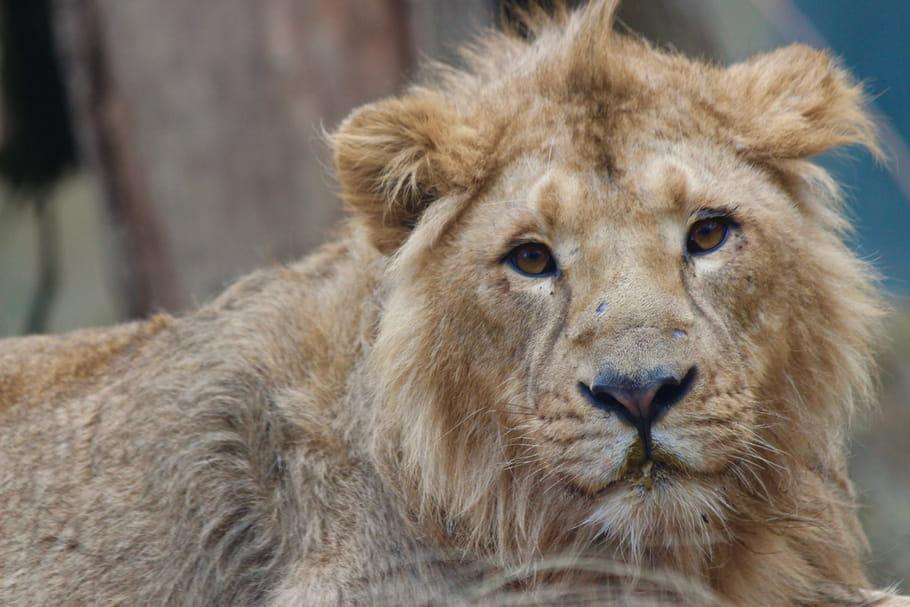 Trois nouvelles espèces au Parc zoologique de Mulhouse