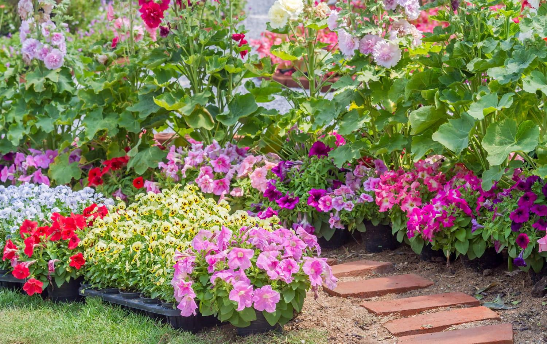 Fleurs: liste de plantes à fleurs pour un jardin coloré toute l'année