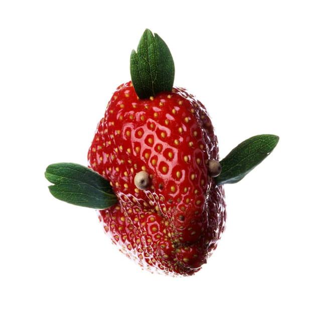 Poisson fraise