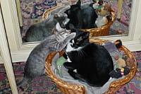 mina et oscar, les chats de l'auteur.