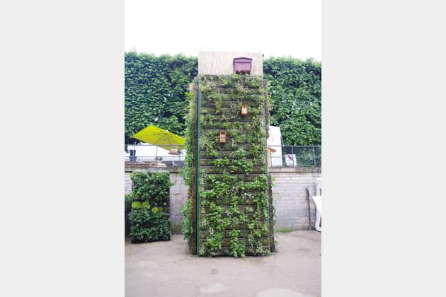De la végétation sur le mur