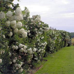 8. La clôture serait... végétale