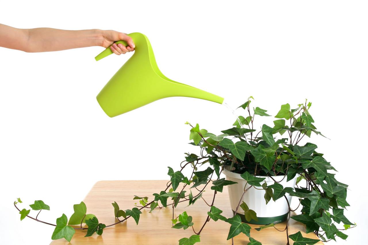 bien arroser ses plantes d'intérieur