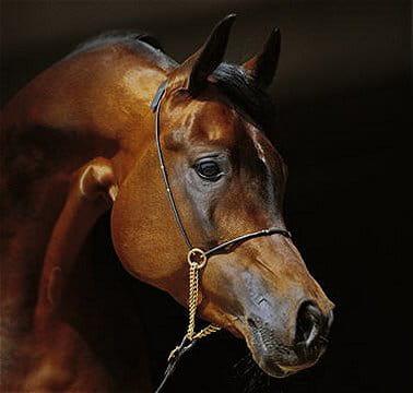 Portraits de chevaux, entre grâce et fragilité