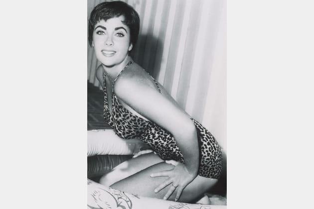 Liz Taylor, féline
