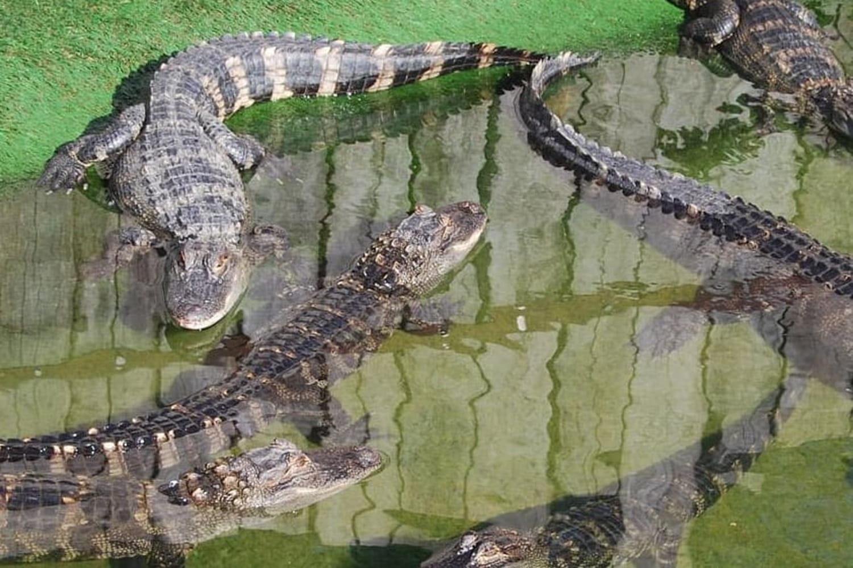 Parc animalier Le PAL: des attractions et des animaux