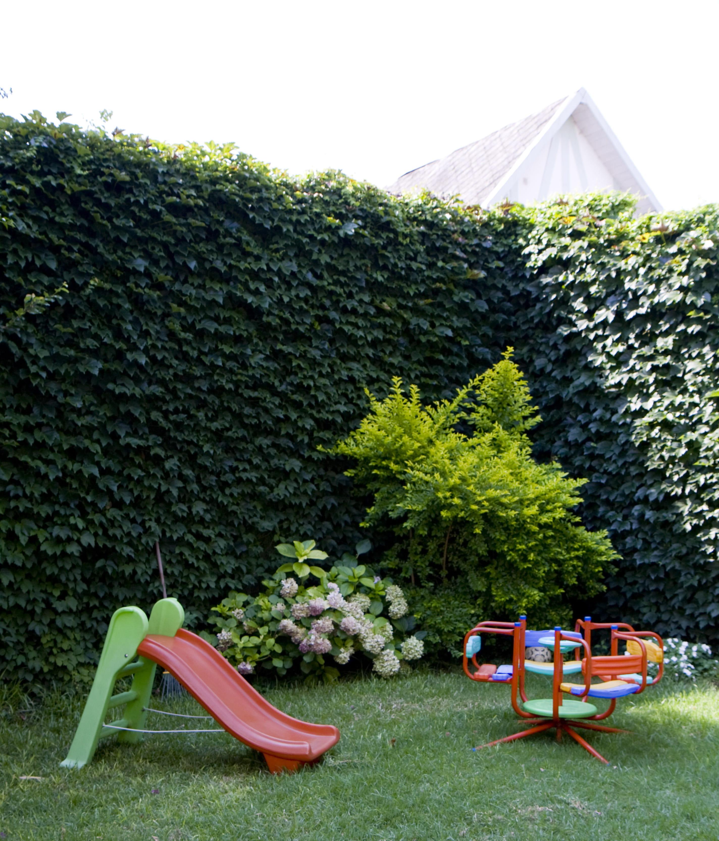 Comment Cloturer Son Jardin comment concevoir une clôture végétale ?
