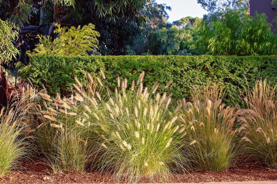 Graminées: choisir, planter et entretenir ces plantes qui ont le vent en poupe