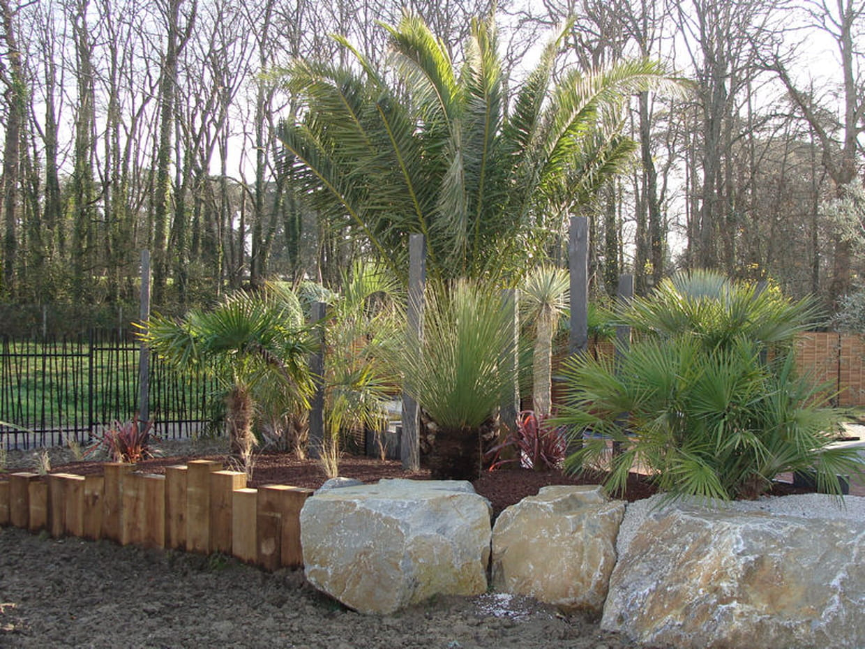Un massif de palmiers for Decoration jardin palmier