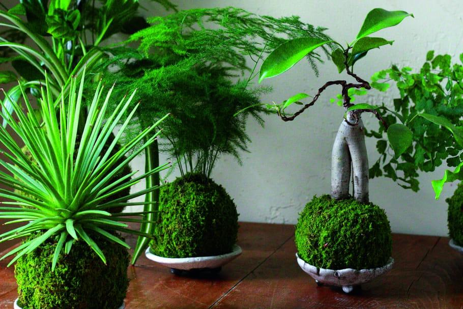 Kokedama: tout savoir sur cette jeune pousse de l'art floral japonais