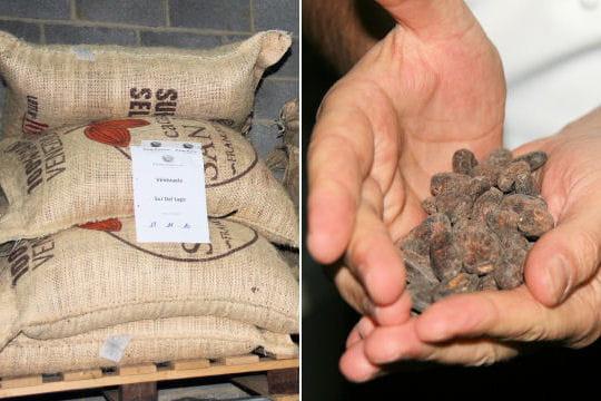Le choix des fèves de cacao