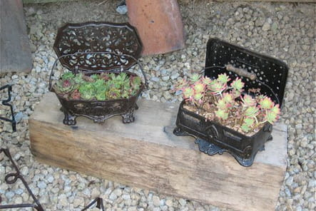 Chaufferettes pour succulentes