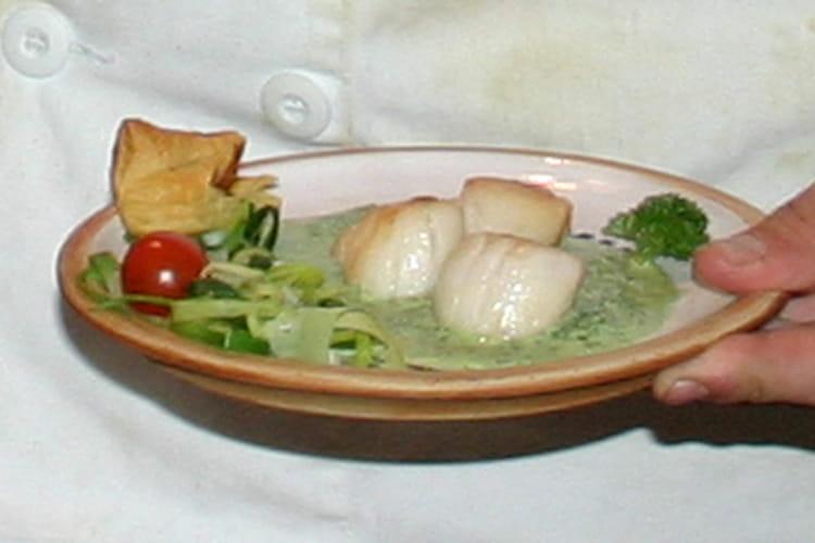 Noix de Saint-Jacques, crème de persil