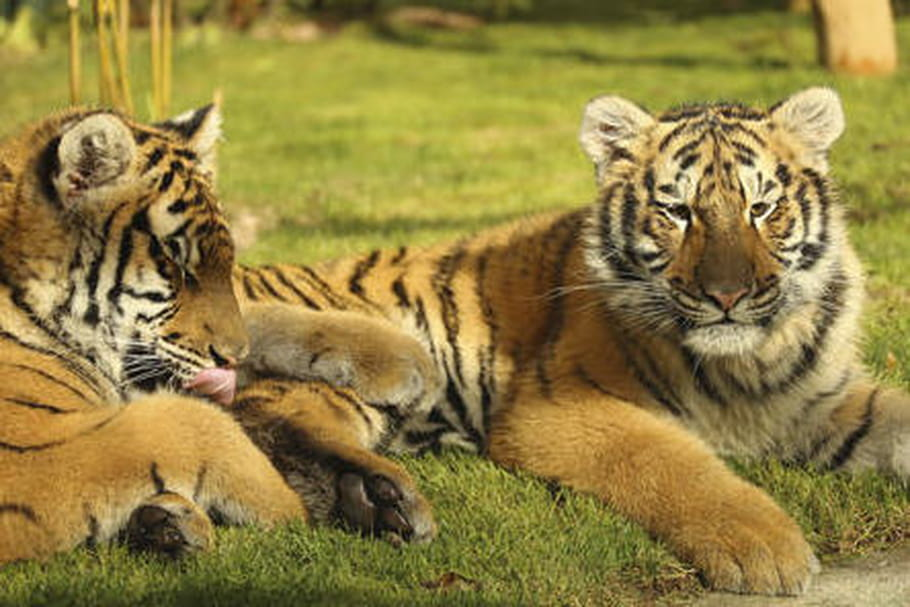 Parc Zoologique d'Amnéville: horaires, tarifs, nouveautés 2017