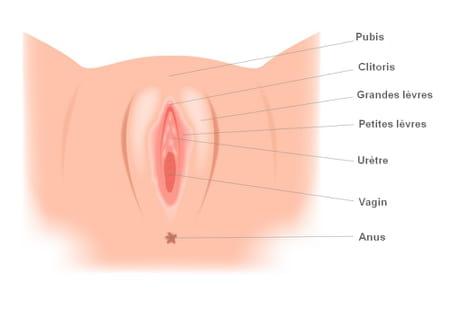 Anatomie vagin