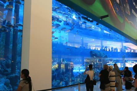 L'Aquarium du Dubaï Mall