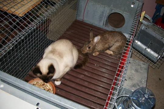 Un chat qui se prend pour un lapin